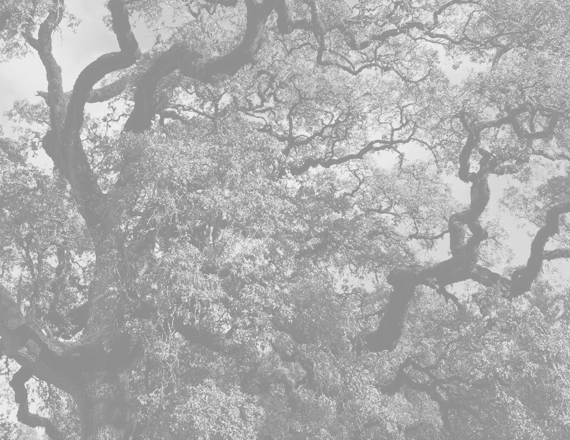 branches-1